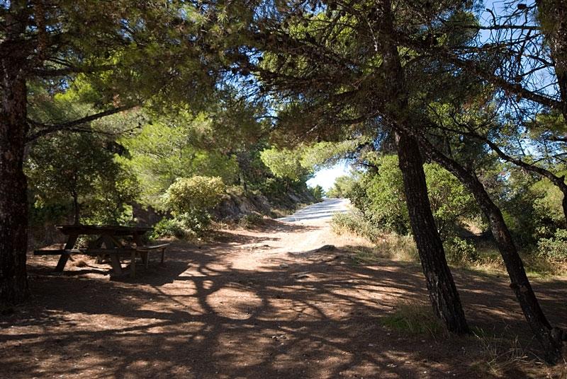 ΕΡΙΚ ΣΜΥΡΝΑΙΟΣ: H φωτεινή προστάτιδα του δάσους